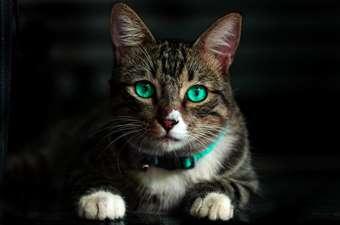 """Originea misterioasă a pisicii. Cum acest animal a fost considerat """"Lucifer"""" pe Pământ"""