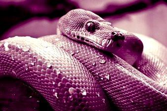 Povestea tragică a unui şarpe – de ce este bine să nu facem rău celor care ne rănesc