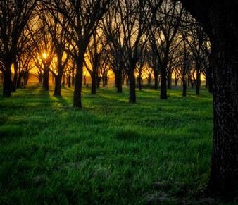 Noua Zeelandă plantează 1 miliard de copaci! Iar Pakistanul vrea să planteze 10 miliarde de arbori! Dar România ce face? Îşi taie pădurile...