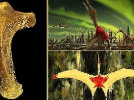 O nouă specie de creatură zburătoare gigantică, cu o anvergură a aripilor de 10 metri