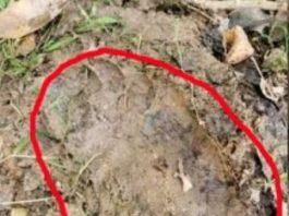 Un bărbat a găsit urme de picior misterioase, care nu-s făcute de oameni sau de animale. Atunci, cui aparţin?