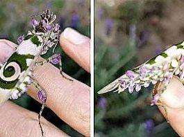 O femeie din Africa de Sud a găsit în grădina ei o insectă uimitoare şi suprarealistă!