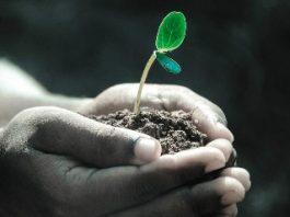 Descoperire extraordinară a unui cercetător cu privire la capacitatea extrasenzorială a plantelor
