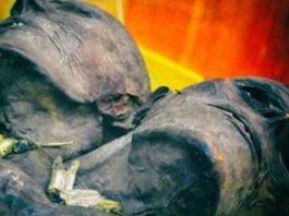 Kap Dwa - mumia unui gigant cu 2 capete şi 3,6 metri înălţime, dintr-un muzeu din SUA