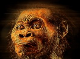Un nou studiu controversat spune că limbajul uman ar fi existat în urmă cu circa 25 de milioane de ani