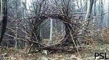 """Mergeţi prin pădure şi vedeţi un fel de """"portal din crengi"""" ca în această imagine. Ce faceţi? Treceţi prin el?"""
