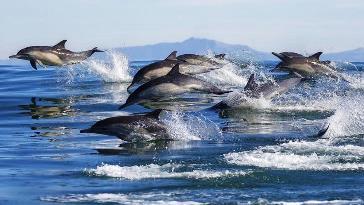 Raport îngrijorător al cercetătorilor: milioane de animale migrează către polii Pământului. De ce?
