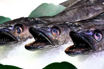 Peştii simt durere? De asta n-ar trebui să-i prindem? Răspunsuri şi explicaţii halucinante