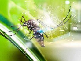 Un studiu ştiinţific german din septembrie 2020 dovedeşte că radiaţiile telefoanelor mobile ar putea ucide insectele