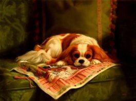 Ţi se frânge inima! Poveşti incredibile, dar adevărate, care arată devoţiunea câinilor faţă de oameni...