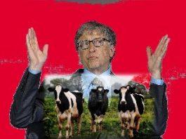 """Miliardarul Bill Gates mai are o idee """"genială"""": vrea ca să renunţăm la carnea de vită şi să consumăm doar """"carne sintetică""""!"""