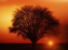 Contactul cu copacii: elimină energiile dăunătoare şi aduc energie pozitivă în trup
