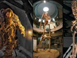 Scheletul unui gigant de 7 metri se află expus într-un muzeu din Ecuador?