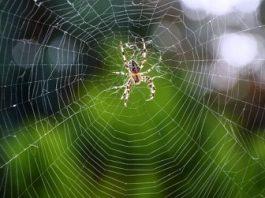 Unde au dispărut mulţi păianjeni în ultima perioadă? Precum şi alte insecte? Ce se întâmplă în jurul nostru?