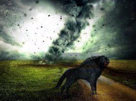 Groază în Anglia: câini negri fioroşi, cu ochi roşii, au fost văzuţi în timpul furtunilor, dar apoi au dispărut! De unde naiba provin ei?