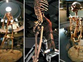 Istoria ascunsă a omenirii: schelete de uriaşi de 7 metri, expuse într-un muzeu al unui preot din Ecuador