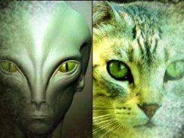 Extratereştrii au chip de pisică? Un raport incredibil din Australia, recent declasificat, dezvăluie informaţii ascunse care îţi taie răsuflarea!