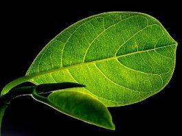 """Descoperire senzaţională a oamenilor de ştiinţă: """"Plantele nu gândesc, dar pot fi influenţate de gândurile noastre!"""""""