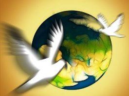 Uimire generală: mii de porumbei voiajori au dispărut fără urmă, un fapt fără precedent în lume! Ce i-a derutat pe aceste păsări?